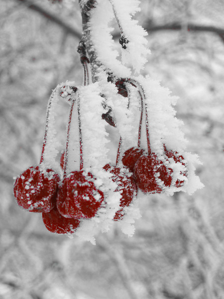 1201 Winter 2010.jpg