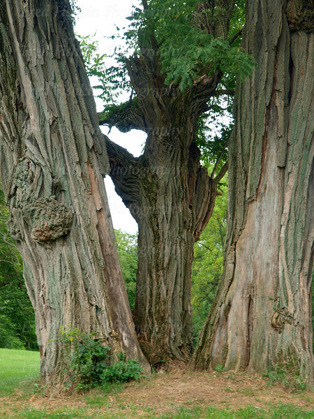 Trees Clermont.jpg