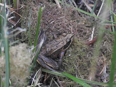 Willapa National Wildlife Refuge