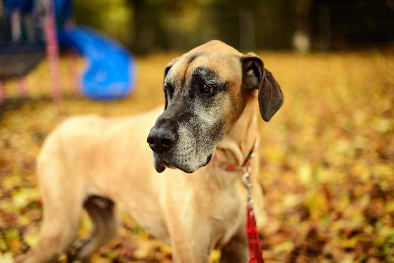 Dog Portraits-3859.jpg