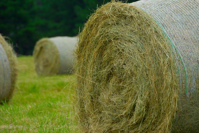 Hay Hay Hay.jpg