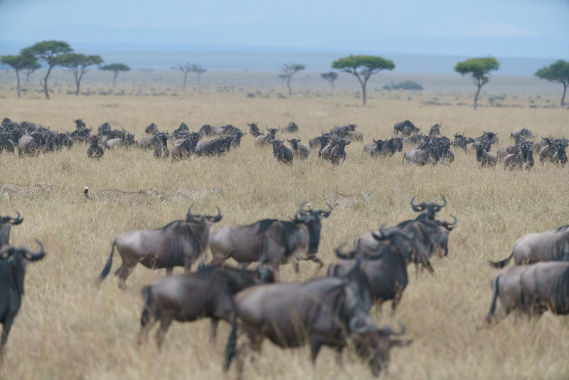 Kenya 2015-07489.jpg