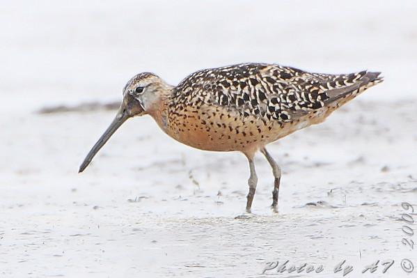 2009-08-05 Riverlands Migratory Bird Sanctuary