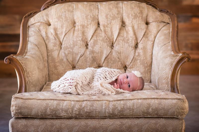 Branch newborn portraits