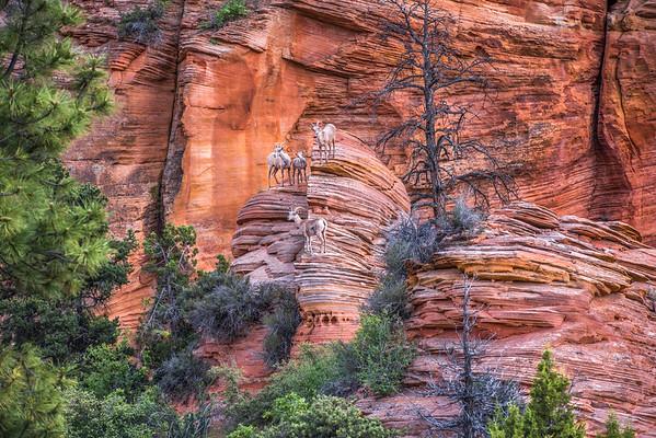 Native Wildlife - Western U.S.