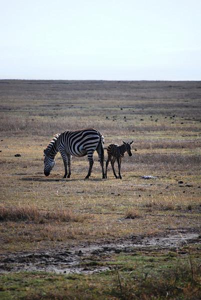 Ngorongoro (2).JPG