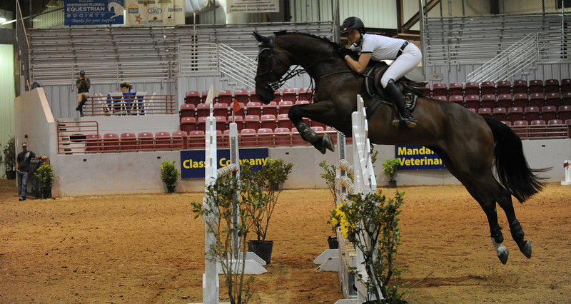 Horse show (92).jpg