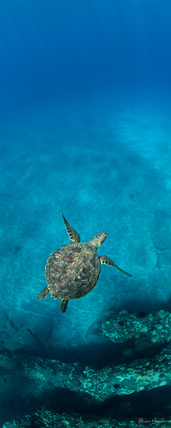 Hawaii Maui 2015-1326-Edit-2-Edituntitled-sig.jpg