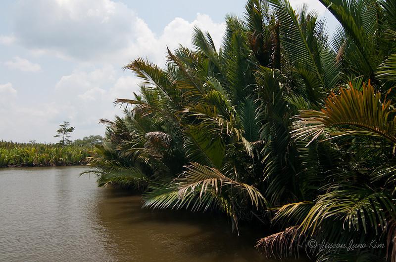 Borneo-Jungle-6677.jpg
