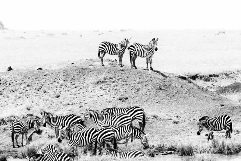 Sep022013_masai mara 1_3792.jpg