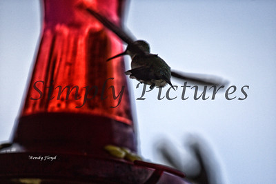 Hummers  (9)