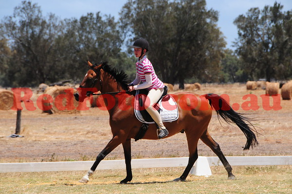 2017 01 22 Oakford Dressage and ShowJumping Day ShowJumping 60cm