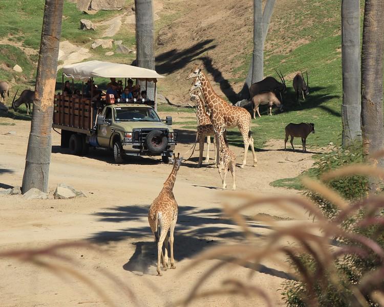 San Diego wild animal pakr 201700056.jpg