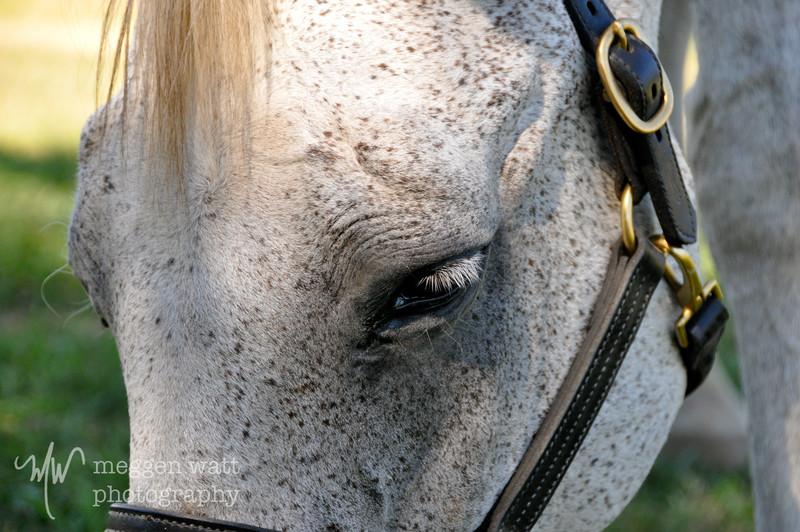 EB&Horses-028.jpg