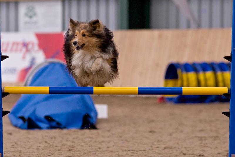 small dog final 1259.jpg