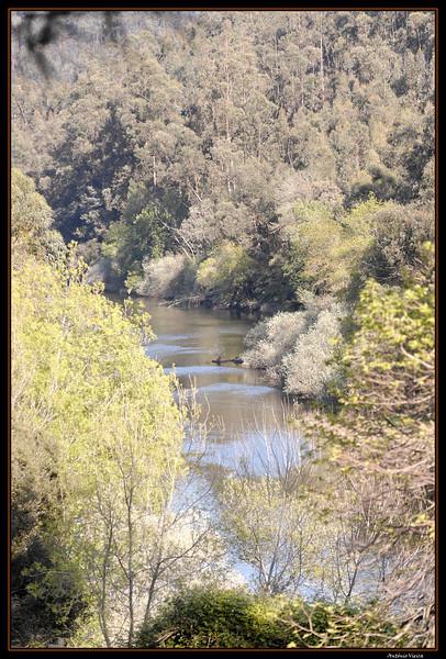 Vouga - 29-03-2008 - 5624.jpg