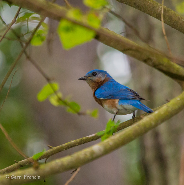 Birds-35.jpg