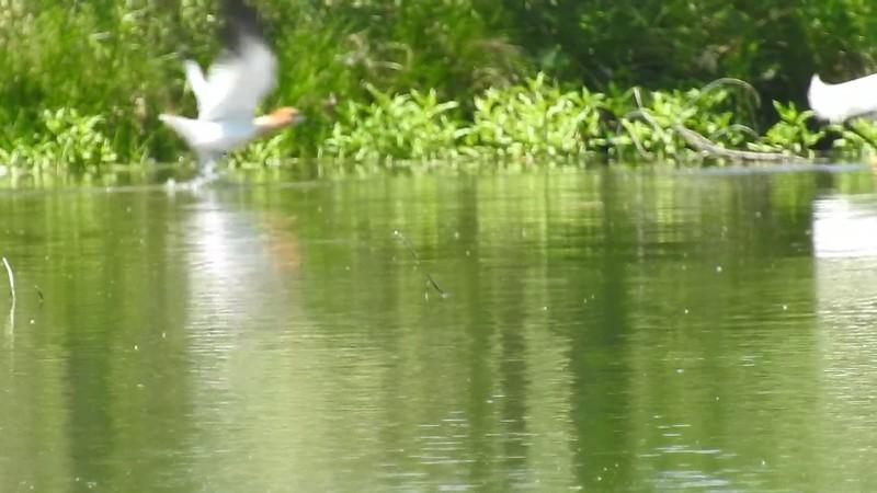 Belmar Birds (13).MOV