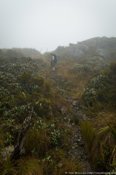 Above the bushline, heading for Little Wanganui Saddle