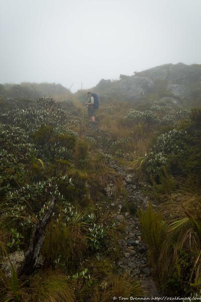 Above the bushline, heading for Little Wanganui Saddle
