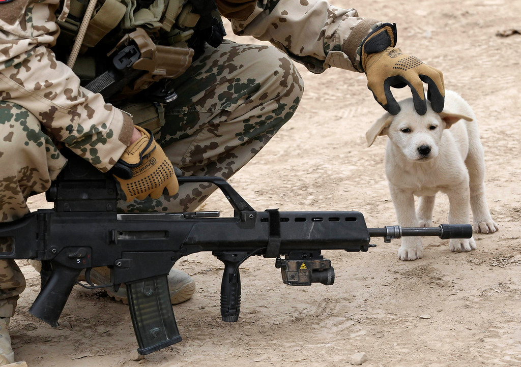 . A German Bundeswehr army soldier with the Delta platoon of the 2nd paratroop company 373 strokes a dog on its head during a mission in the city of Iman Sahib, north of Kunduz, northern Afghanistan, December 6, 2010.   REUTERS/Fabrizio Bensch