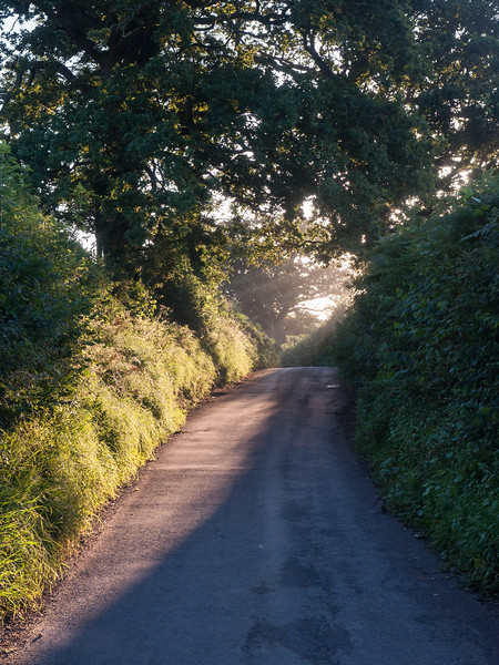 Morning light on Dorset lanes