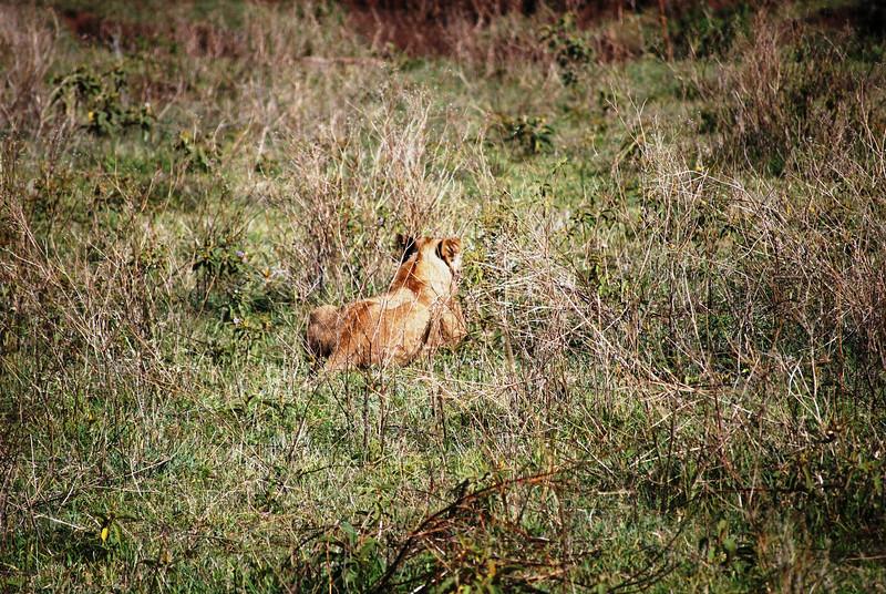 Ngorongoro (83).JPG