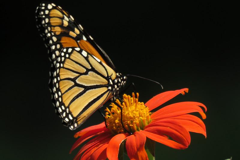 monarch one.jpg