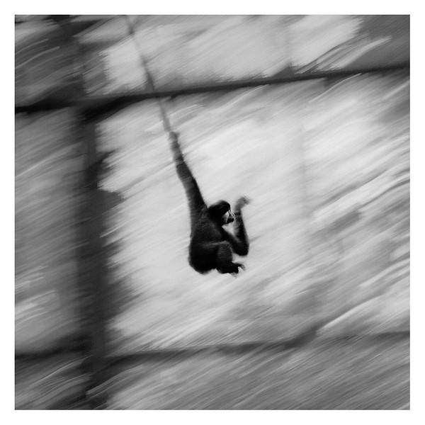 Monkey01b.jpg