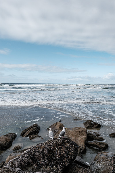 coast-pictures-by-mike-hall-34.jpg