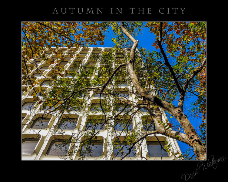 Autumn Comes to Sydney-Edit.jpg