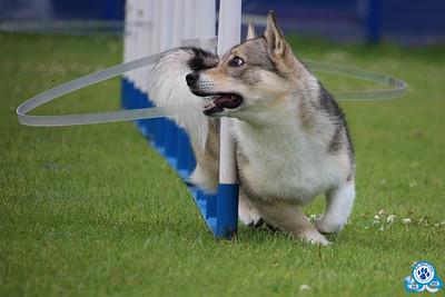 7 juli 2019 ~ Onderlinge agilitywedstrijd Yuno