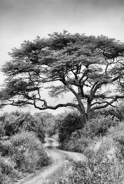 African Path -Edit.jpg