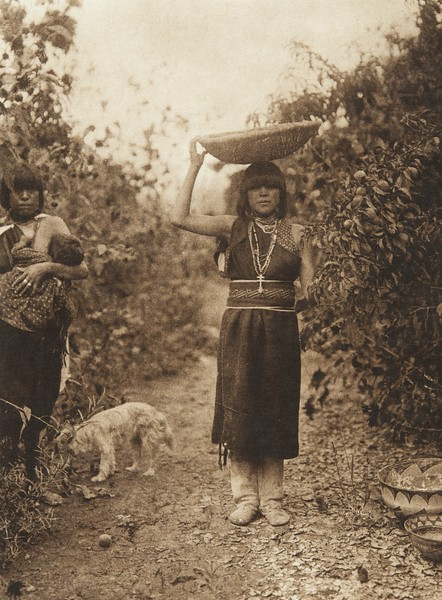 Peach harvest - San Ildefonso (The North American Indian, v. XVII. Norwood, MA, The Plimpton Press,  1926)