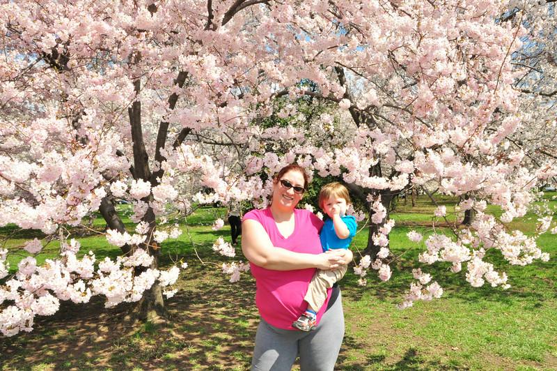 Cherry Blossoms 2014 081.jpg