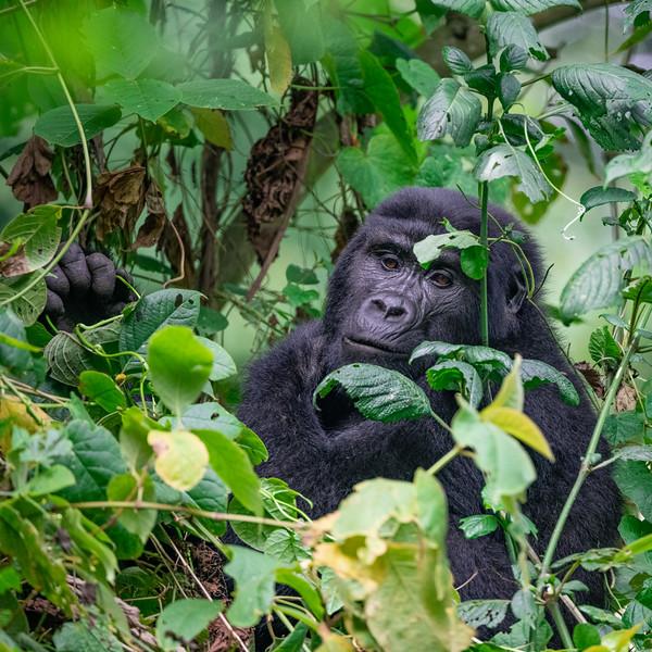 Uganda_T_Gor-2197.jpg