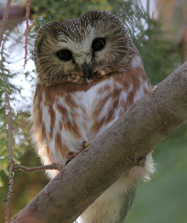 Raptors: Hawks, falcons, owls, vultures