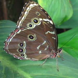 Schmetterlingausstellung 2014