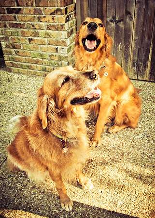 Buddy & Scout 2