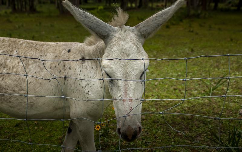 Animals&Creatures-007.jpg