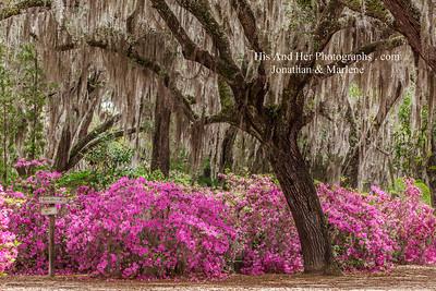 Bonaventure Savannah