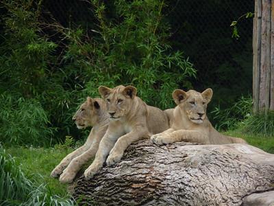 Cincinnati Zoo - 26 June '15