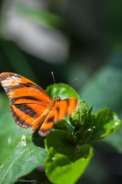 Butterfly, Calgary Zoo