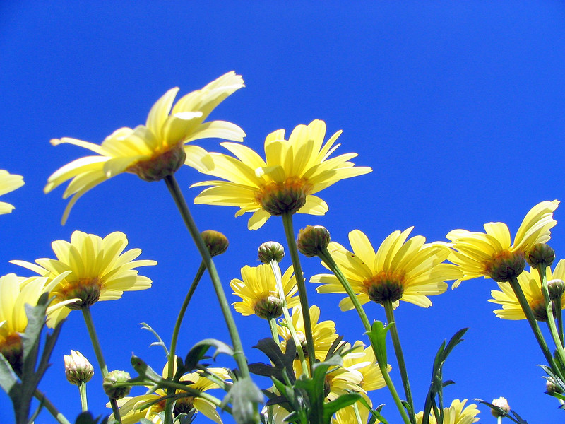 5_28_19 Yellow with Blue.jpg