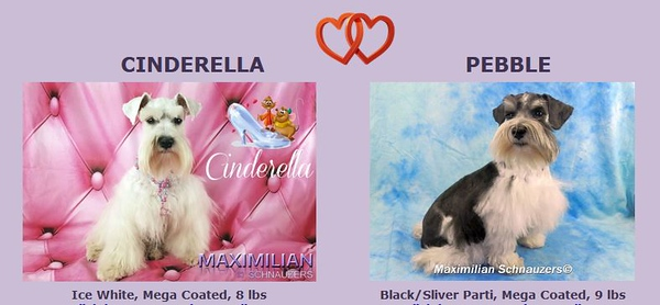 Cinderella & Pebble Puppy, DOB 8/20/2019