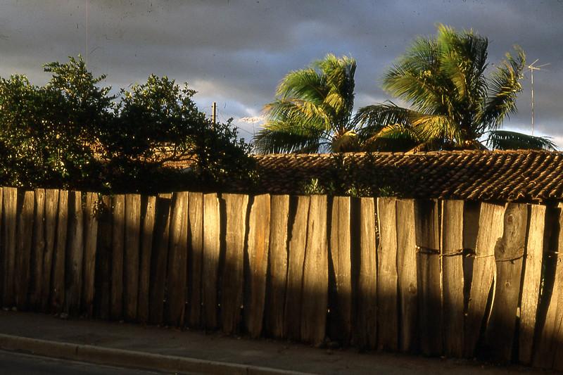 sunlitwall&palms.jpg