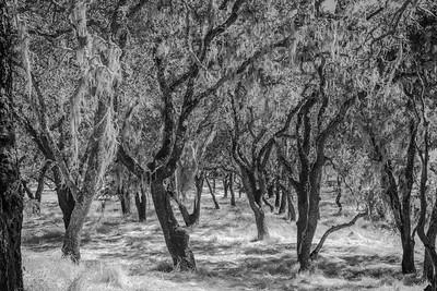 trees: shelter