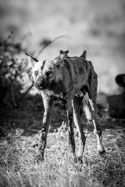 Botswana_June_2017 (5307 of 6179).jpg