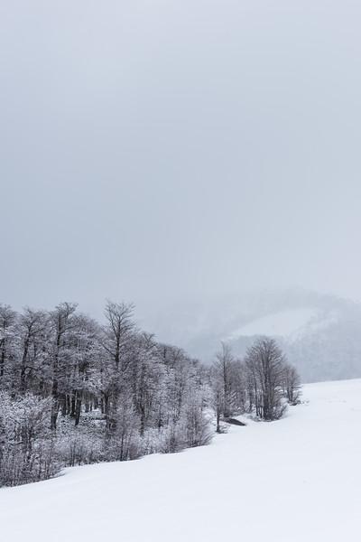 Durante la nevazón