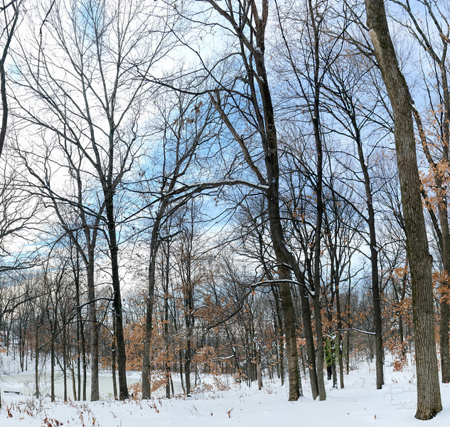 Forest Pond in Winter